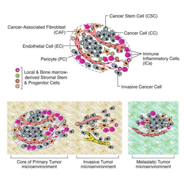 The Cells of the Tumor Microenvironment