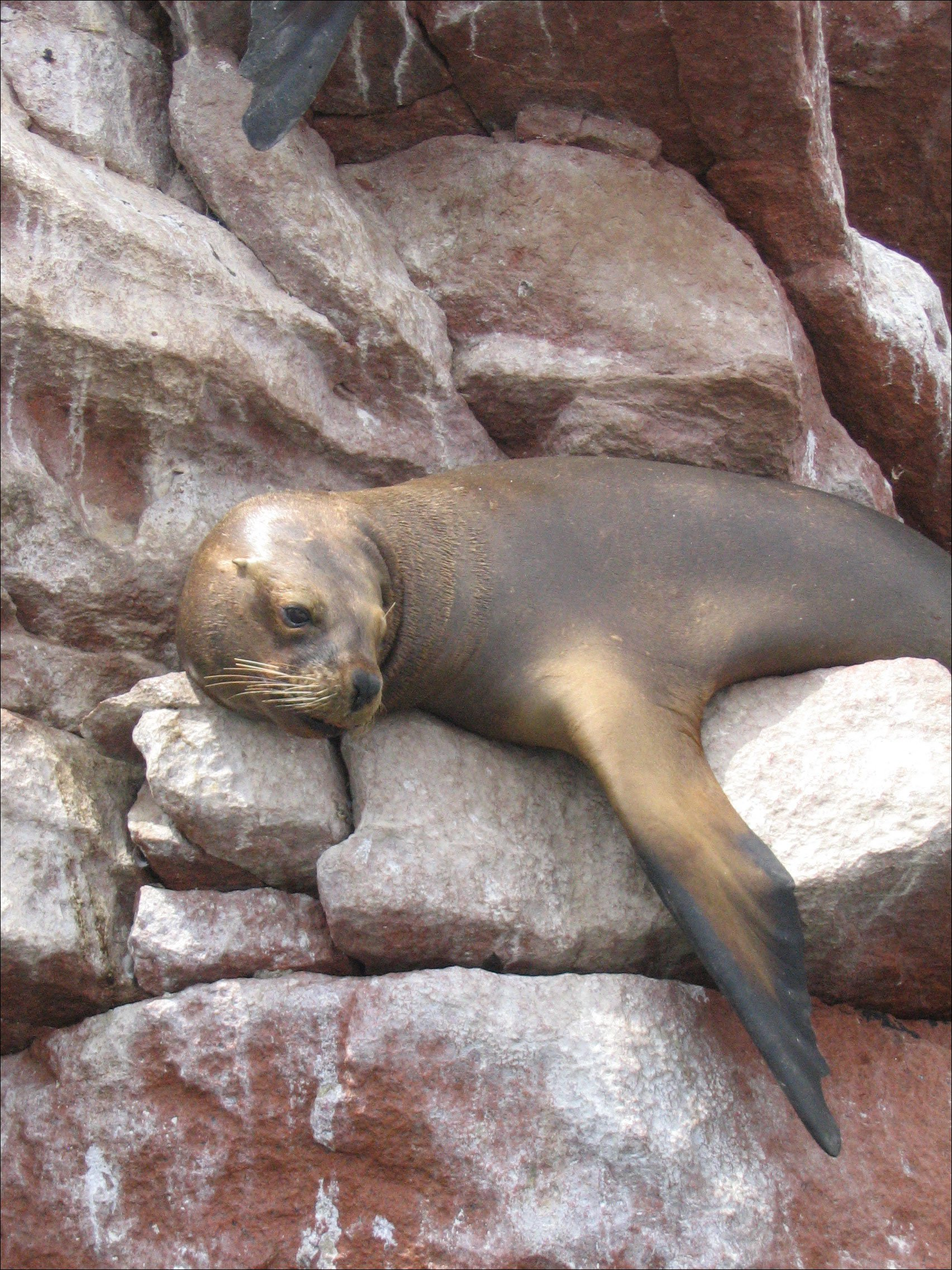 Photo of a seal.
