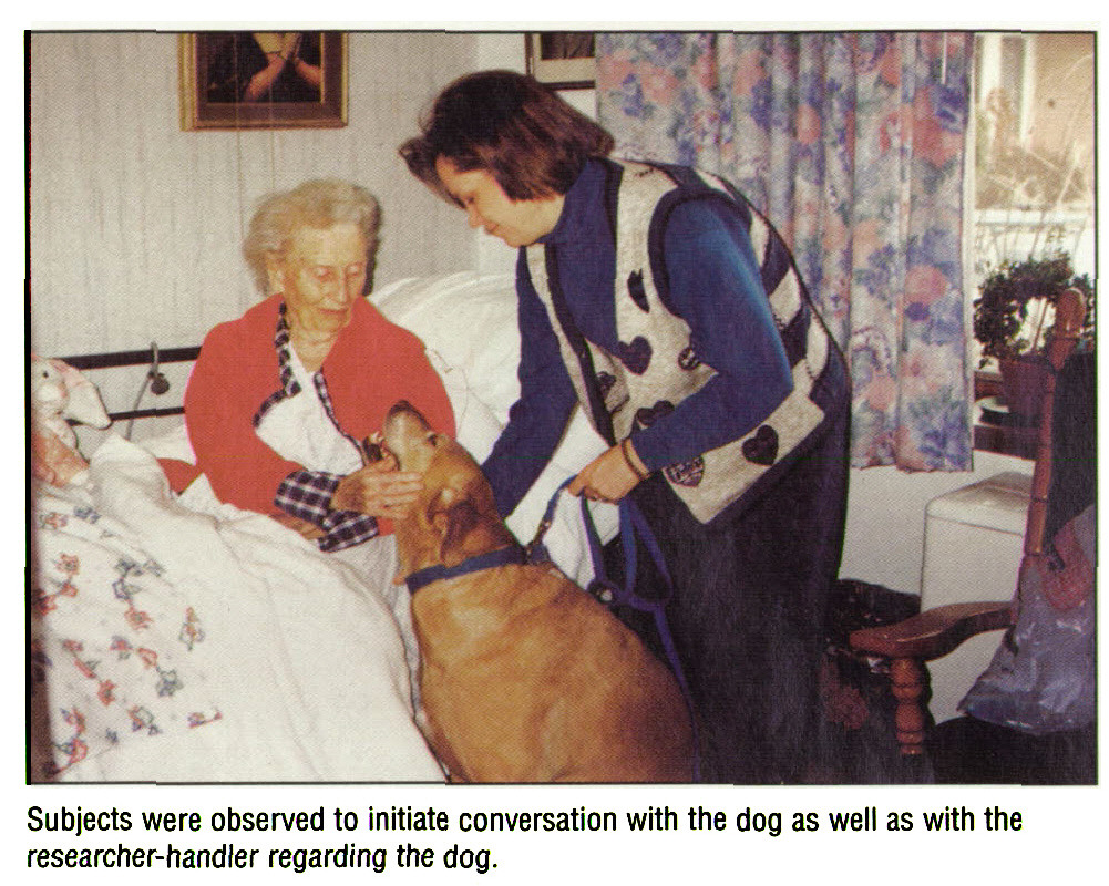 Subjects were observed to initiate conversation with the dog as well as with the researcher-handler regarding the dog.