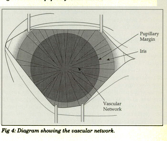 Fig 4: Diagram showing the vascular network.