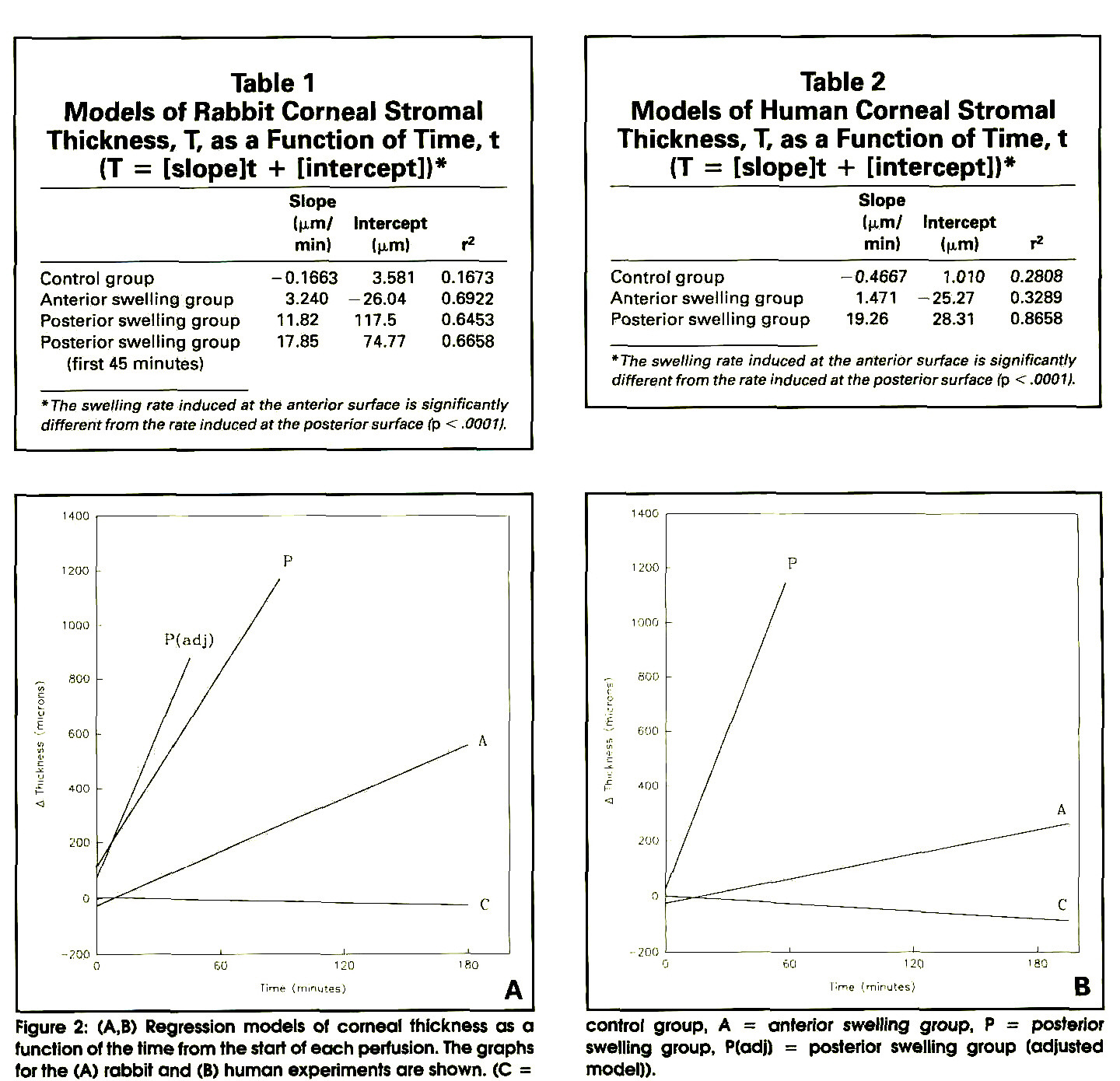 Table 1Models of Rabbit Corneal Stromal Thickness, T, as a Function of Time, t (T = [slopelt + [intercept])*Table 2Models of Human Corneal Stromal Thickness, T, as a Function of Time, t (T = [slopelt 4- [intercept])*Figure 2: (A,B) Regression models of corneal thickness as a function of the time from the start of each perfusion. The graphs for the (A) rabbit and (B) human experiments are shown. (C = control group, A = anterior swelling group, P = posterior swelling group, P(ad|) = posterior swelling group (adjusted model)).