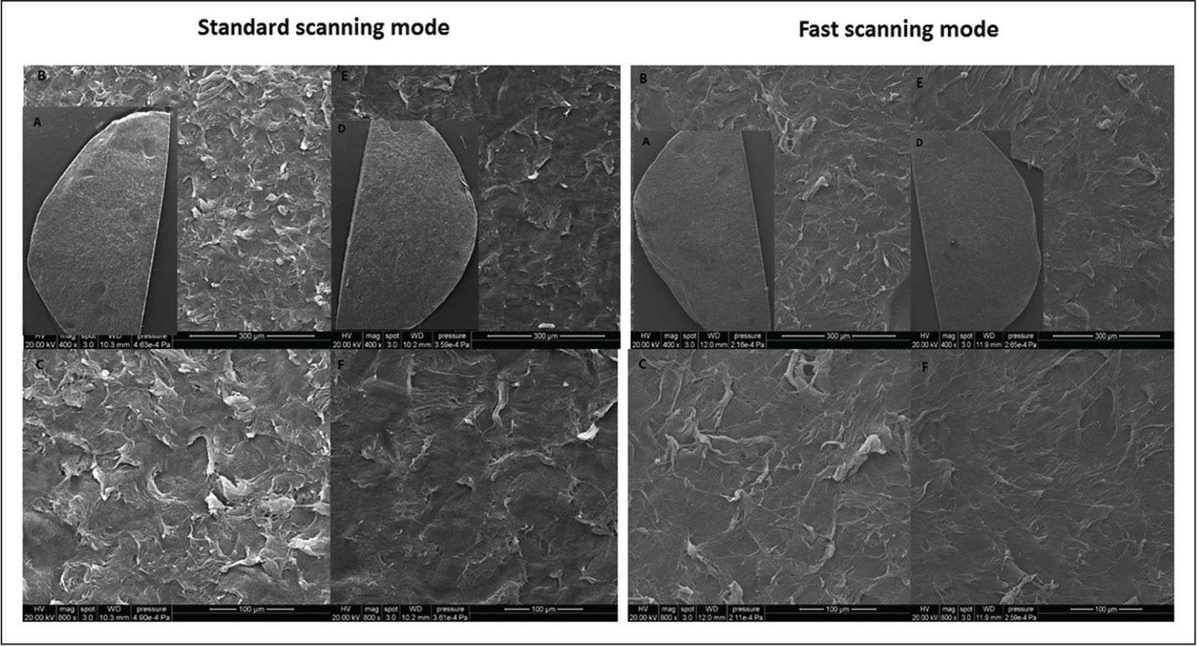 Environmental scanning electron microscopy showing the lenticular surface of sides 1 and 2: (A, D) 50×, (B, F) 400×, and (C, F) 800× original magnification of the standard scanning and fast scanning groups, respectively.