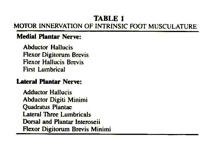 TABLE 1MOTOR INNERVATION OF INTRINSIC FOOT MUSCULATURE