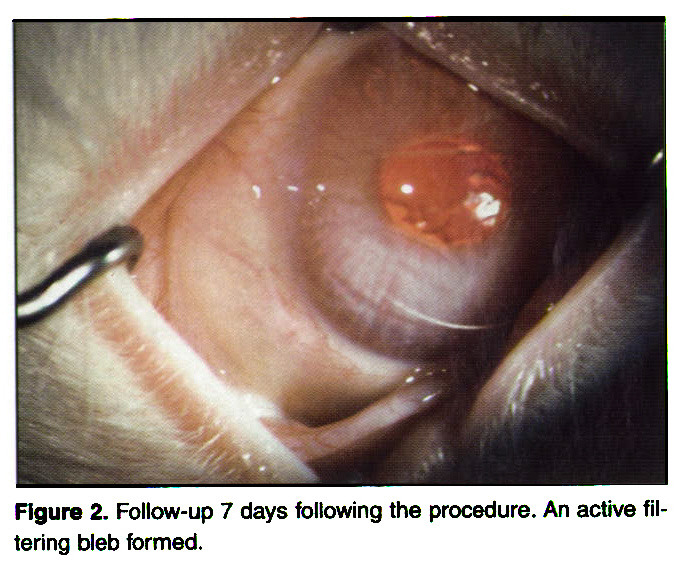 How fast does ivermectin work for scabies
