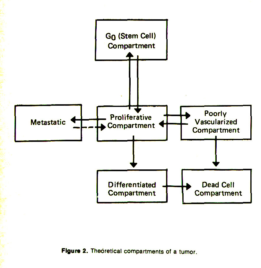 Figure 2. Theoretical compartments of a tumor.