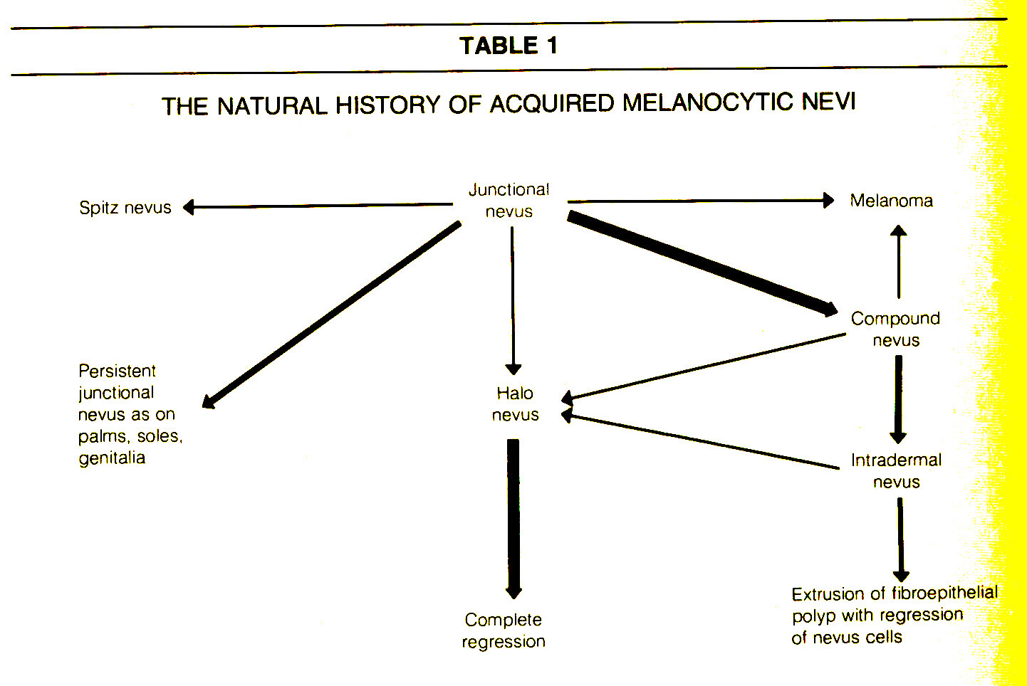 TABLE 1THE NATURAL HISTORY OF ACQUIRED MELANOCYTIC NEVI