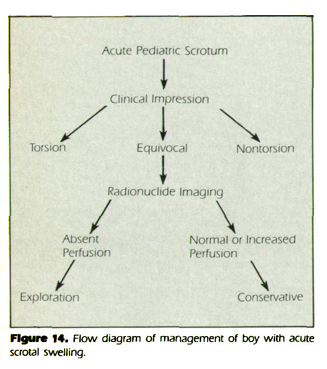 Figure 14. Flow diagram of management of boy with acute scrotal swelling.