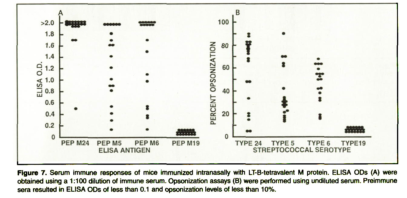 Figure 7. Serum immune responses of mice immunized intranasally with LT-B-tetrava)ent M protein. ELISA ODs (A) were obtained using a 1:100 dilution of immune serum. Opsonization assays (B) were performed using undiluted serum. Preimmune sera resulted in ELISA ODs of less than 0.1 and Opsonization levels ?? less than 10%.