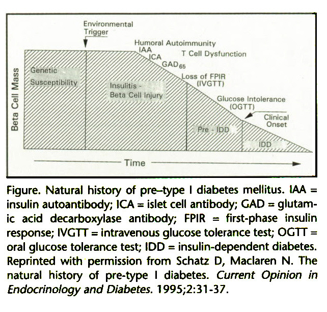 Figure. Natural history of pre-type I diabetes mellitus. IAA = insulin autoantibody; ICA = islet cell antibody; GAD = glutamic acid decarboxylase antibody; FPIR = first-phase insulin response; IVGTT = intravenous glucose tolerance test; OGTT = oral glucose tolerance test; IDD = insulin-dependent diabetes. Reprinted with permission from Schatz D, Maclaren N. The natural history of pre-type I diabetes. Current Opinion in Endocrinology and Diabetes. 1995;2:31-37.