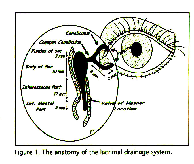 Figure 1. The anatomy of the lacrimal drainage system.