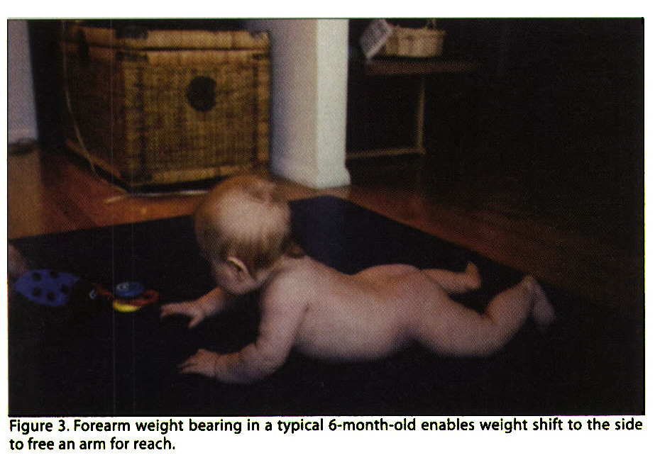 Figure 3. Forearm weight bearing in a typical 6-month-old enables weight shift to the side to free an arm for reach.