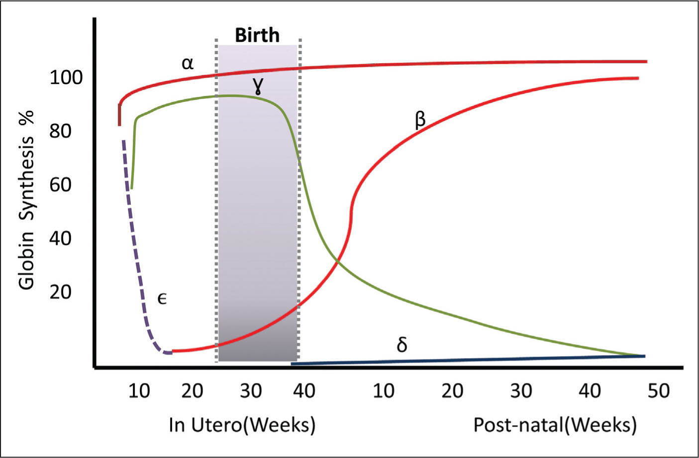 Globin switch during in utero and post-natal life.Figure courtesy of Deepak Kamat, MD, PhD, FAAP.