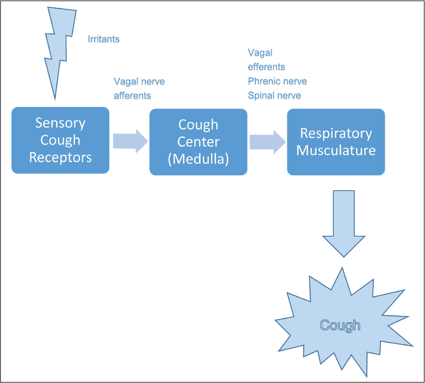 The multisystem mechanism of a cough and the reflex involved.