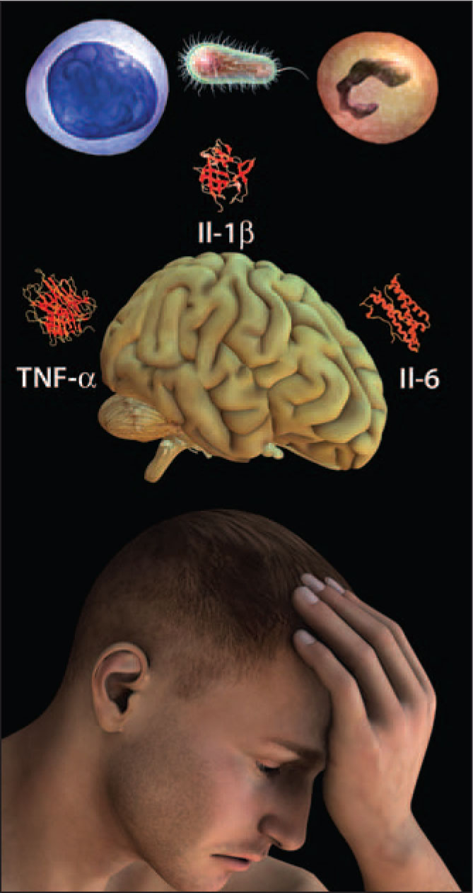 Summary of the Sickness Response. Sickness Symptoms Are Caused by the Action of Cytokines Produced by Immune Responses on Specific Regions of the Brain. All Illustrations Are Copyright George I. Viamontes, 2009; Copyright Is Transferred to the Publisher.; Used with Permission. A Note from the Editors: All Illustrations in This Article Have Been Created by Dr. Viamontes for Specific Use in This Issue of Psychiatric Annals. Images of Blood Vessels and Immune System Cells Used Throughout the Article Were Licensed from Zygote, Inc. Images of the Cytokines and Other Molecules Were Downloaded as Data Files from the Research Collaborative for Structural Informatics Protein Data Bank (RSCB PDB).22 Used with Permission.