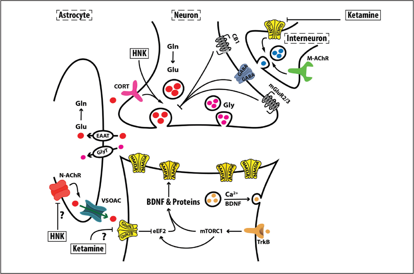 The mechanism of action of rapid-acting antidepressants (RAADs). The figure depicts the targets of a glutamatergic synapse that might lead to the RAAD effects of ketamine and its metabolite hydroxynorketamine (HNK). Ketamine is thought to block interneuron NMDAR signaling leading to glutamate release disinhibition and transient surge in postsynaptic AMPA and NMDA receptors activity, ultimately resulting in increased protein synthesis and synaptic strength in the prefrontal cortex. The latter is thought to be necessary and sufficient to exert RAAD effects. AMPA, alpha-amino-3-hydroxy-5-methyl-4-isoxazolepropionic acid receptor; BDNF, brain-derived neurotrophic factor; CB1, cannabinoid receptor; EAAT, excitatory amino acid transporter; eEF2, eukaryotic elongation factor 2; Gln, glutamine; GluN1, NMDA subtype 1; GluN2B, NMDA subtype 2B; Glu, glutamate; Gly, Glycine; GlyT, Glycine transporter; M-AChR, muscarinic acetylcholine receptor; mGluR2/3, metabotropic glutamate receptor subtype 2 and 3; mTORC1, mechanistic target of rapamycin complex 1; N-AChR, nicotinic AChR; TrkB, tyrosine kinase B receptor; VSOAC, volume-sensitive organic osmolyte/anion channel. Adapted with permission from the Emerge Research Program (http://emerge.care).
