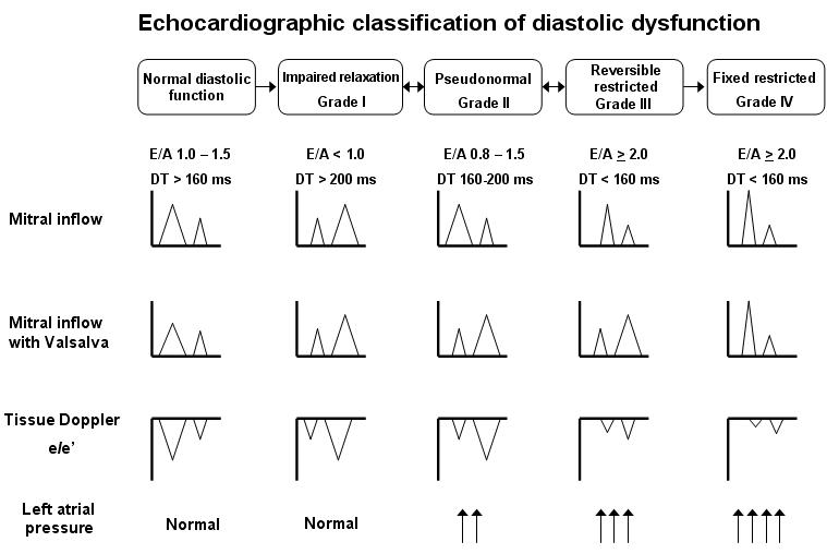 DD-echoClassification