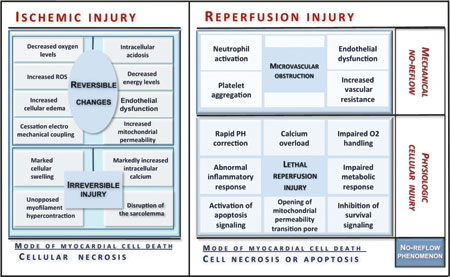 pathophysiology of cellular swelling during cell injury •mnemonic: causes of injury give a physician necessary information  how  does loss of calcium homeostasis result in cell injury  er and cell swelling.