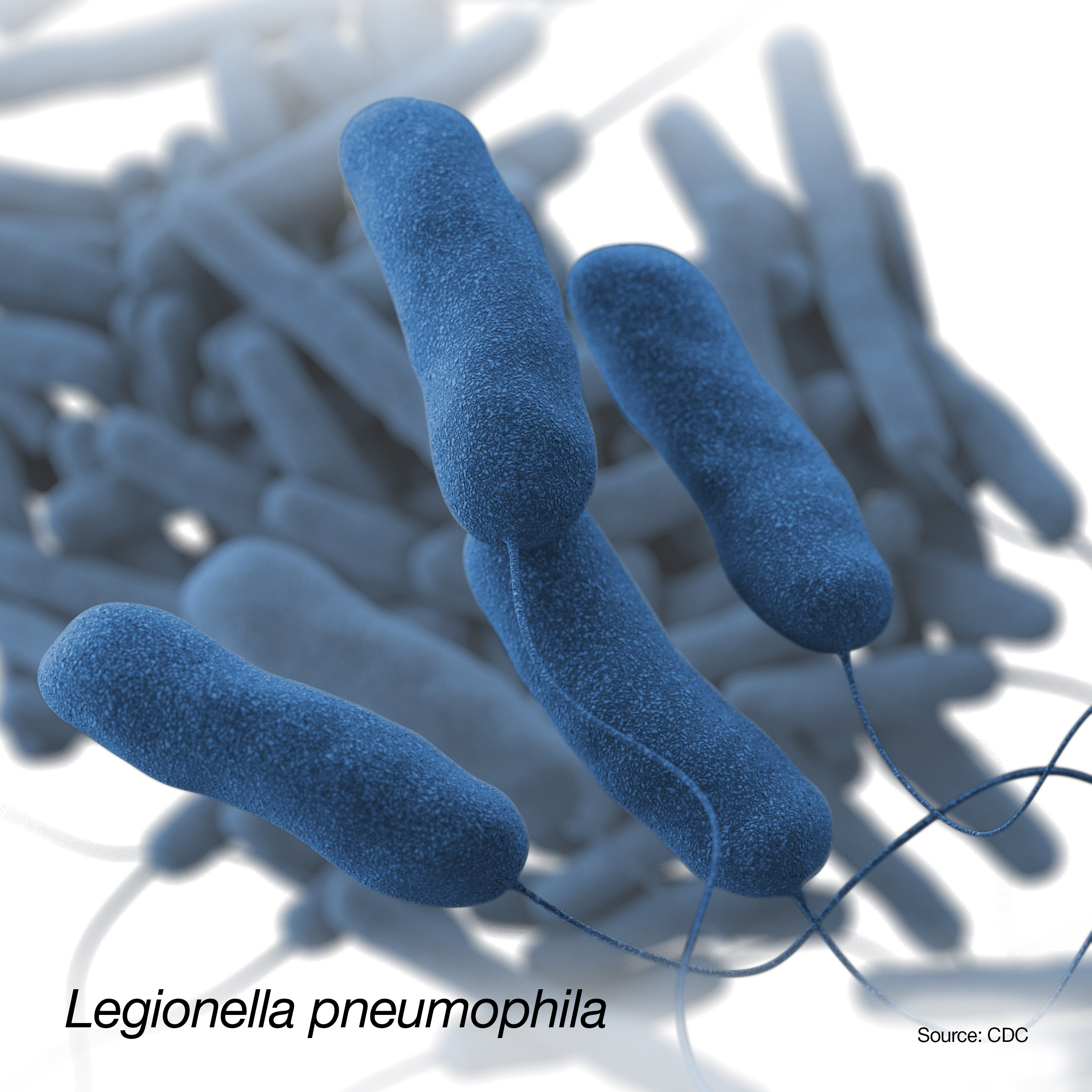 Photo of legionella pneumophila