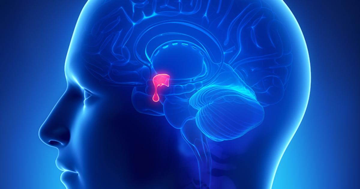 Pituitary gland 2019