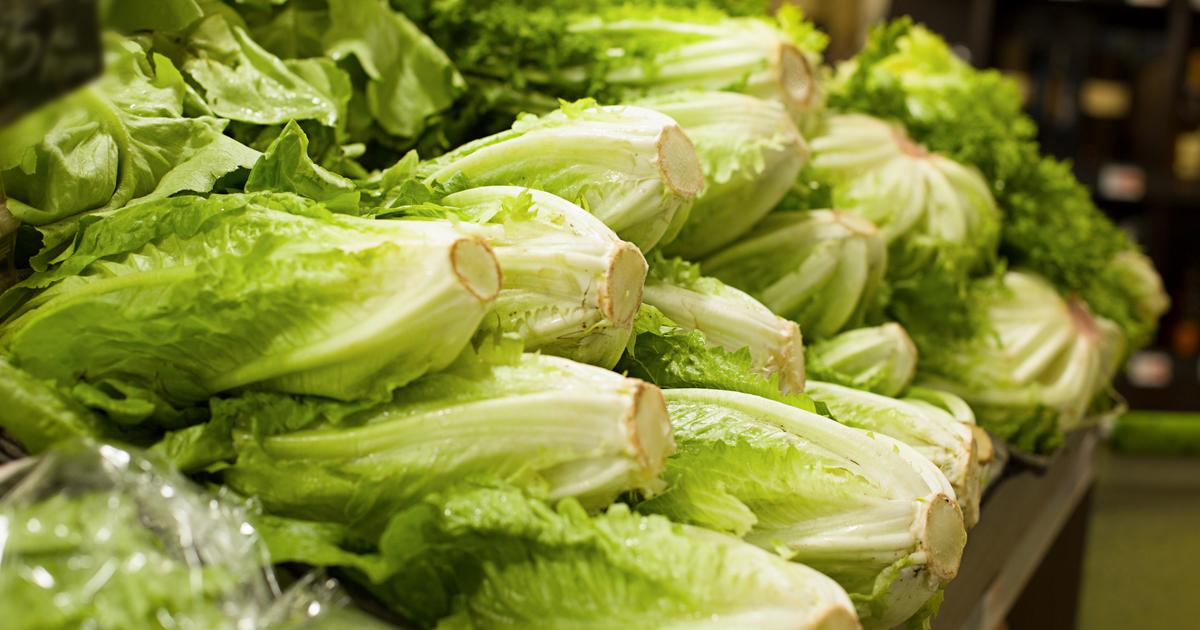 photo of romaine lettuce