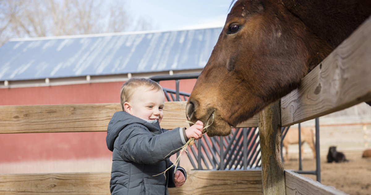 Young boy at petting zoo feeding horse